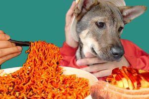 Dân mạng kêu gọi tẩy chay trào lưu ép chó ăn sốt cay trên Tik Tok