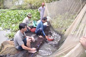 Độc đáo nghề dỡ chà bắt cá