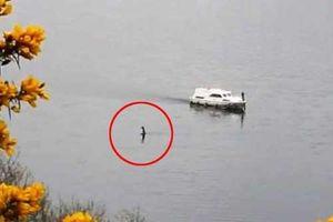 Quái vật hồ Loch Ness bất ngờ trồi lên, ngỏng cổ di chuyển gần tàu du lịch
