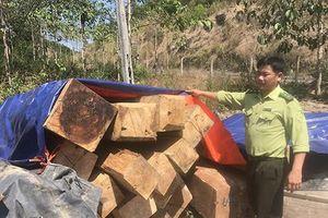 Phát hiện hơn 5,56m3 gỗ xẻ cất giấu tại khu vực Cây Gòn