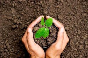 Bộ NN-PTNT chủ trì hoàn thiện Đề án trồng 1 tỷ cây xanh giai đoạn 2021-2025