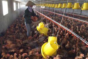Xây dựng vùng an toàn dịch bệnh trong chăn nuôi: ''Chìa khóa'' để phát triển bền vững