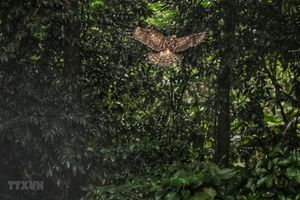 Tái thả 92 cá thể động vật hoang dã về Vườn quốc gia Cúc Phương