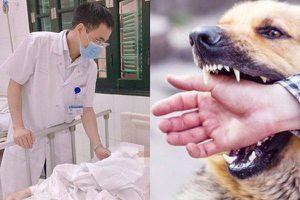 Những trường hợp chó cắn người, chủ phải chịu trách nhiệm