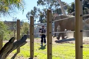 Liều lĩnh ẵm con 2 tuổi 'chui tọt' vào chuồng voi, người đàn ông làm rơi cả con