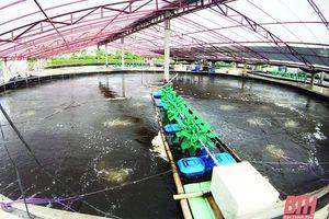 Xây dựng các mô hình nuôi trồng thủy sản thích ứng với biến đổi khí hậu