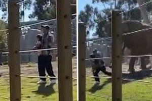 Bố bế con gái 2 tuổi chui vào chuồng voi để chụp ảnh, bị voi đuổi chạy đánh rơi cả con