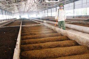 Tìm hướng xử lý phụ phẩm nông nghiệp