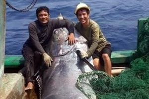 Ngư dân Quảng Trị bắt được con cá cờ 'khủng' gần đảo Cồn Cỏ