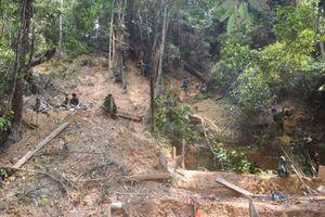 Đà Nẵng: Tăng cường tuần tra giám sát, bảo vệ rừng nghiêm ngặt