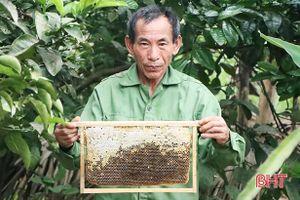 Được mùa mật, người nuôi ong quanh hồ Kẻ Gỗ phấn khởi tăng đàn