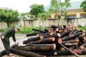 Xử phạt 10 triệu đồng đối tượng khai thác rừng thông trái phép ở Kỳ Anh