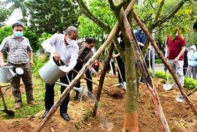 Xây dựng Thừa Thiên Huế trở thành xứ sở mai vàng của Việt Nam