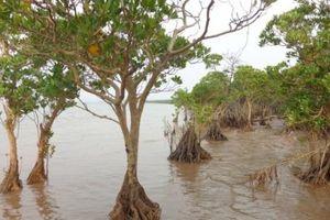 Rừng ngập mặn Đồng Rui đủ điều kiện trở thành khu Ramsar