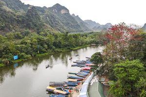 Hoa gạo cổ bung sắc tại Chùa Hương