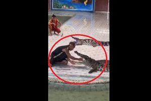 Kinh hoàng cảnh cá sấu bất ngờ ngoạm tay huấn luyện viên khi đang biểu diễn