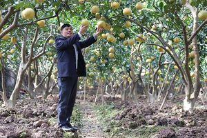 Huyện Hoài Đức: Hỗ trợ tiêu thụ nông sản chất lượng cao
