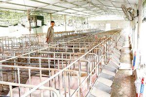 Xác định quy mô, đầu tư chăn nuôi hợp lý