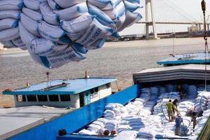 Chỉ có 207 thương nhân đủ điều kiện kinh doanh xuất khẩu gạo