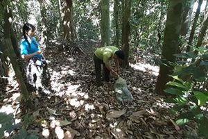 Thả khỉ đuôi lợn và trăn gấm quý hiếm về rừng tự nhiên