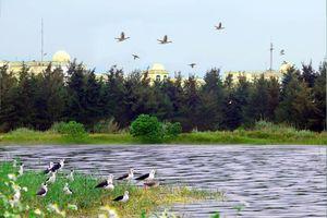 Ngỡ ngàng trước cảnh quan, môi trường xanh ở Formosa Hà Tĩnh