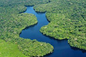 LHQ nhấn mạnh vai trò của người bản địa trong bảo vệ rừng ở Mỹ Latinh, Caribe