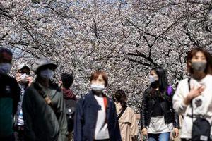 Người dân Tokyo đổ xô đi ngắm hoa anh đào bất chấp cảnh báo
