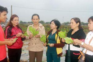 Phụ nữ Bình Định tích cực thực hiện 'sản xuất sạch, chế biến sạch, tiêu dùng sạch'
