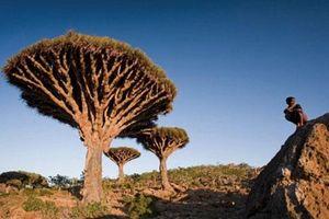 Quần đảo của những giống cây kỳ lạ nhất thế giới