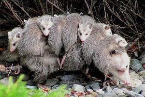 Đây là những bà mẹ yêu con nhất trong thế giới động vật