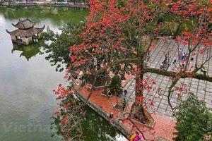 'Nao lòng' với cảnh sắc của chùa Thầy khi hoa gạo bung nở đỏ rực rỡ