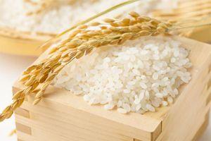 Giá lúa gạo hôm nay 27/3: Giá lúa nếp giảm, giá gạo ổn định