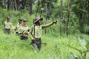 Chủ động triển khai các giải pháp phòng cháy, chữa cháy rừng
