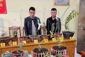 Thanh Hóa: Đột nhập nhà dân, trộm lan đột biến tiền tỷ