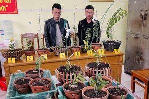 Thủ đoạn của 2 đối tượng chuyên trộm cắp lan đột biến ở Thanh Hóa
