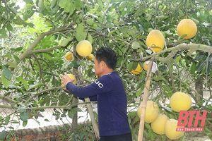 Xã Bắc Lương phát triển cây ăn quả