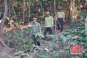 Bảo vệ rừng vùng giáp ranh huyện Như Xuân với tỉnh Nghệ An