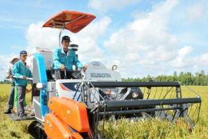 Giá lúa đông xuân cao, nông dân lãi ròng hàng chục triệu mỗi ha