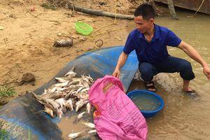 Đâu là nguyên nhân cá chết hàng loạt trên sông Con?