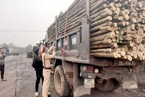 Hãi hùng xe chở cây keo, tràm tung hoành ở các địa phương