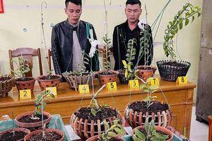 Lên mạng xã hội 'săn' những gia đình trồng lan đột biến tiền tỷ để trộm