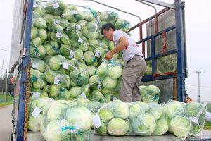 Sau giải cứu, rau xanh Nghệ An quay ngược tăng giá gấp 3 lần