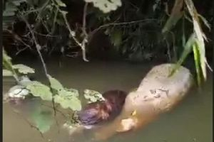 Phát hiện lợn chết thả trôi trên kênh mương ở Hà Tĩnh