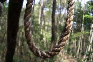 Khu rừng có hàng ngàn người 'đua' nhau vào tự sát