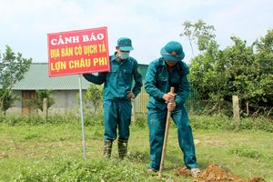 Một huyện của Nghệ An tiêu hủy gần 150 tấn lợn bị dịch tả Châu Phi