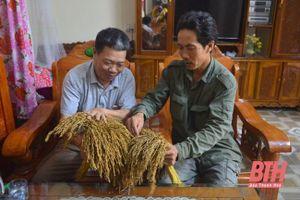 Nếp hạt cau Lộc Thịnh - đặc sản vùng đất Tây Đô