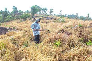 Vụ cấp nhầm đất ở Vạn Ninh (Khánh Hòa): Sẽ thanh tra làm rõ