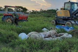 Lợn chết do dịch tả, xã chậm xử lý vì gia đình vừa thông báo