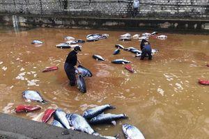 Biến dòng sông thành 'nồi lẩu cá khổng lồ' để thức tỉnh về môi trường