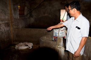 Diễn Châu: Lợn ốm, chết do nhiễm dịch tả lợn châu Phi nhưng chậm tiêu hủy